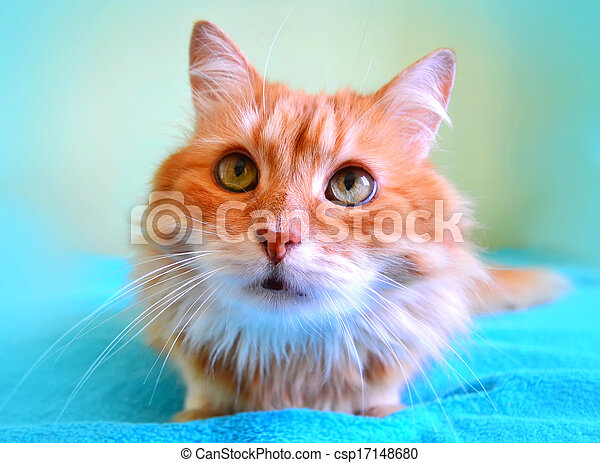 The portrait of beautiful red cat - csp17148680