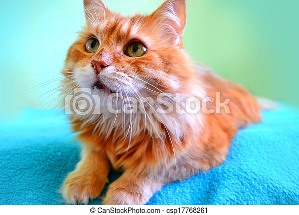 The portrait of beautiful red cat - csp17768261