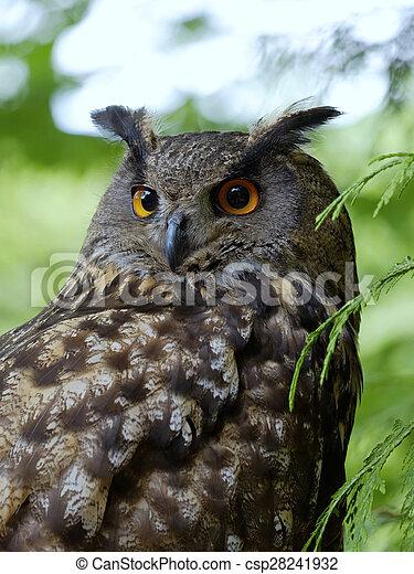 The portrait of Eagle Owl (Bubo Bubo) - csp28241932