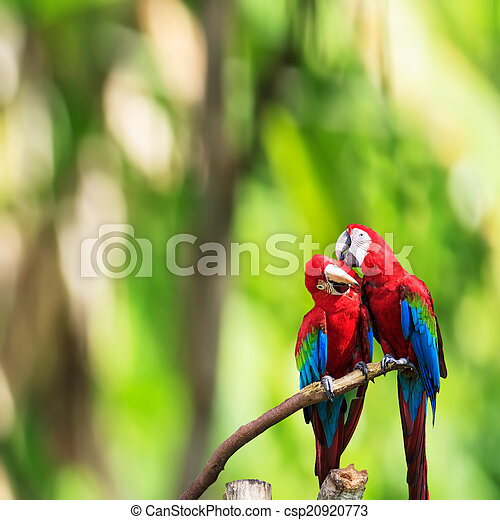 The potrait of Blue & Gold Macaw - csp20920773