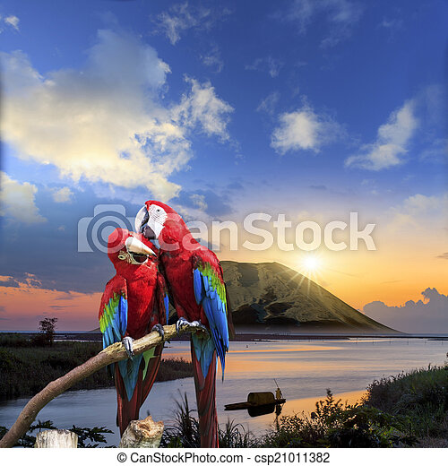 The potrait of Blue & Gold Macaw - csp21011382