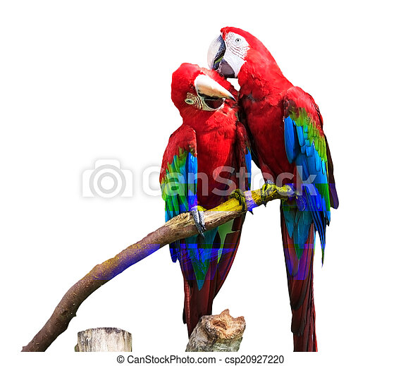 The potrait of Blue & Gold Macaw - csp20927220