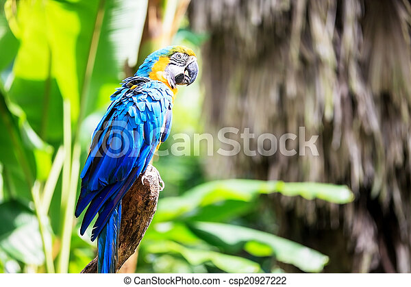 The potrait of Blue & Gold Macaw - csp20927222