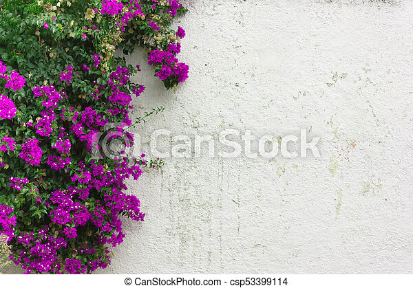 The Purple Leaves Pink Flowers Ivy On White Wall The Purple