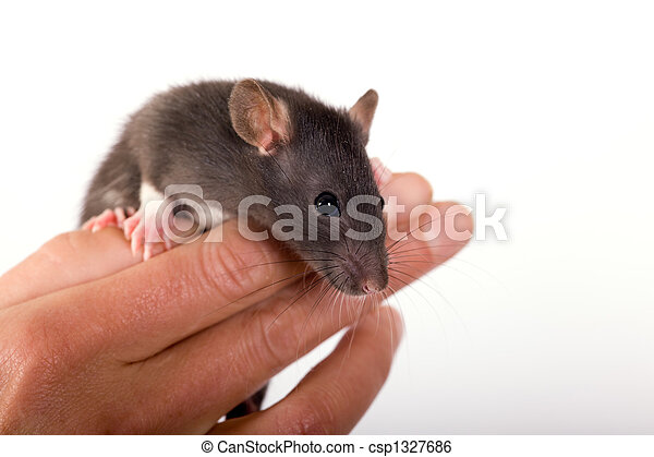 The Rat on the fingers - csp1327686