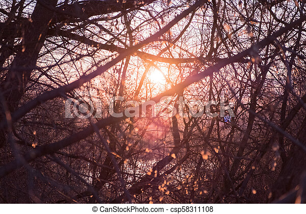 The rays of the evening sun through the trees - csp58311108