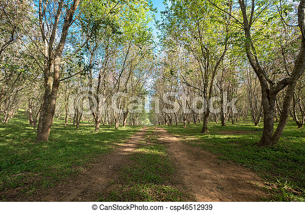 The road passes through a tunnel of trees - csp46512939