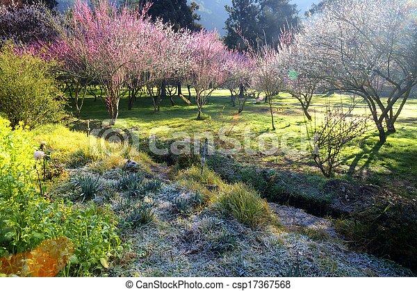 The sakura season of Taiwan - csp17367568