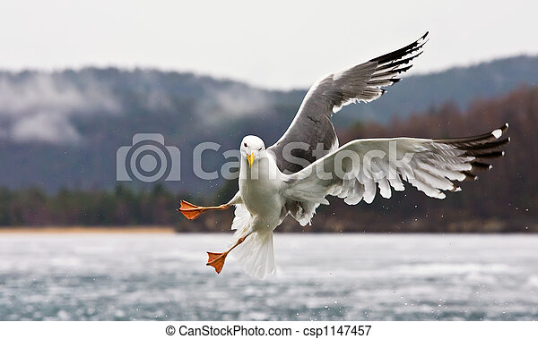 The seagull - csp1147457