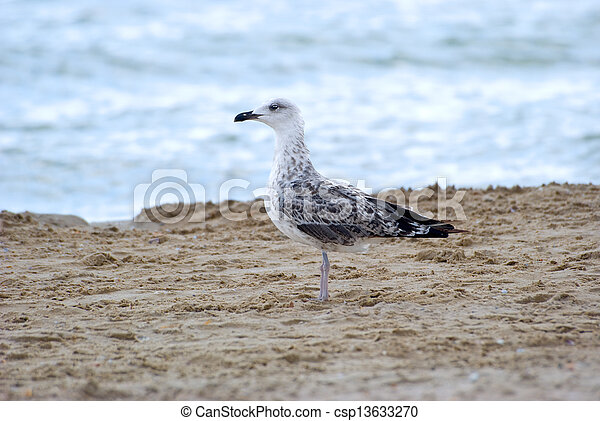The seagull - csp13633270