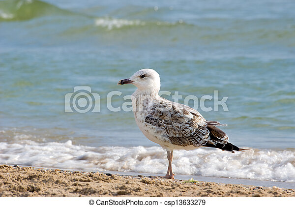 The seagull - csp13633279