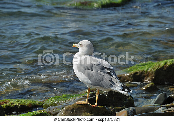 The seagull - csp1375321