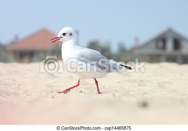 The Seagull - csp14465875