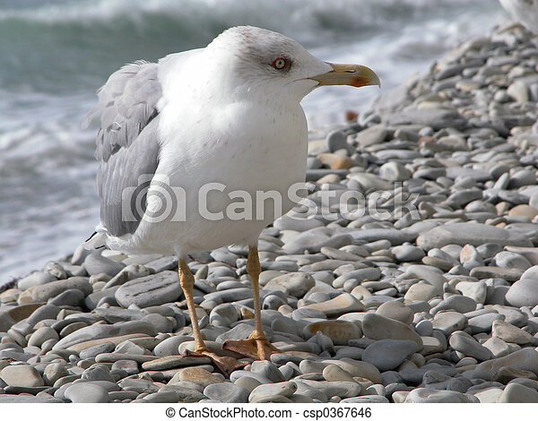 The seagull - csp0367646