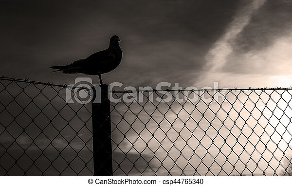 The seagull - csp44765340