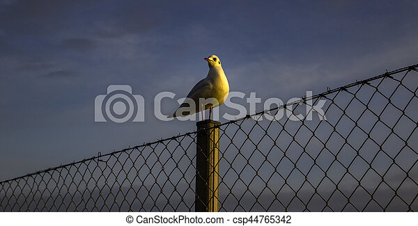 The seagull - csp44765342