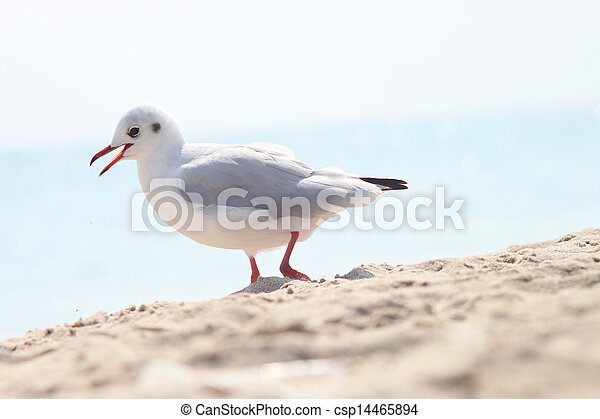 The Seagull - csp14465894