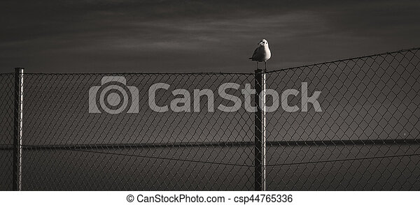The seagull - csp44765336