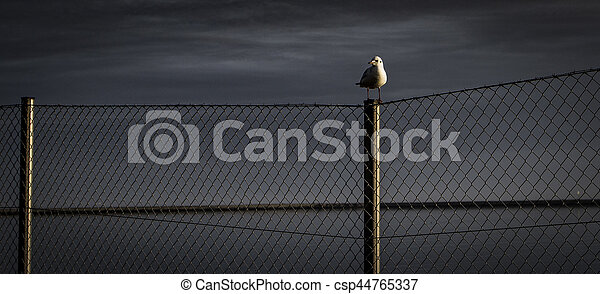The seagull - csp44765337