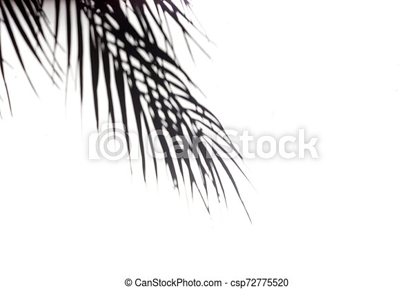 The Shadow Of Tropical Leaves On The White Wall Black And White Image To Overlay The Photos Or The Mockup Real Photo The Canstock Free returns ✓ free shipping on orders $49+ ✓. can stock photo