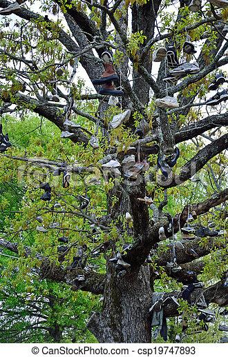 The Shoe Tree - csp19747893