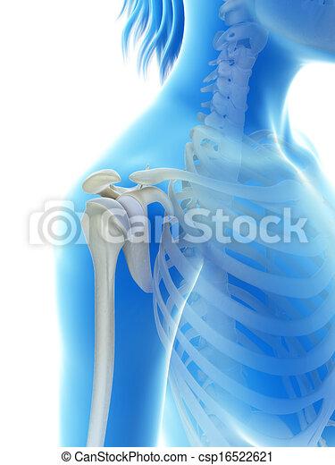 The shoulder joint - csp16522621