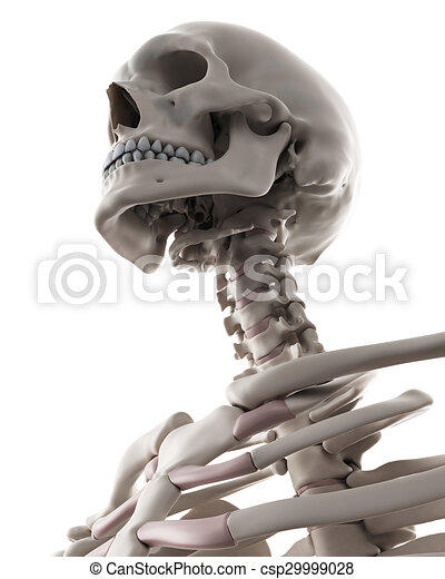 Medically Accurate Illustration Of The Skeletal System The Clip