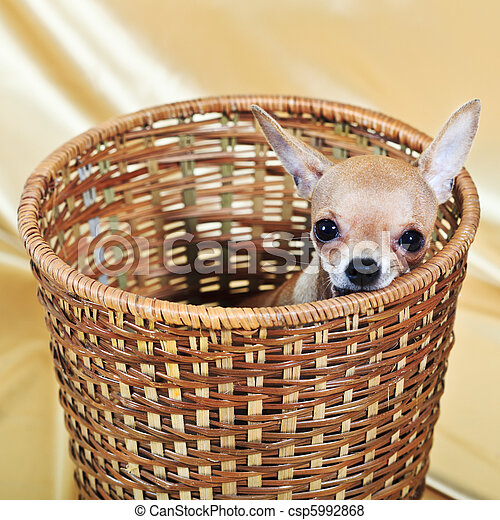 the smallest breed of dog - csp5992868