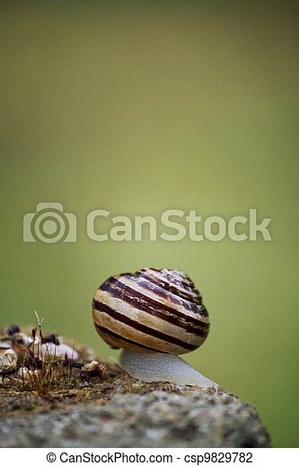the snail - csp9829782