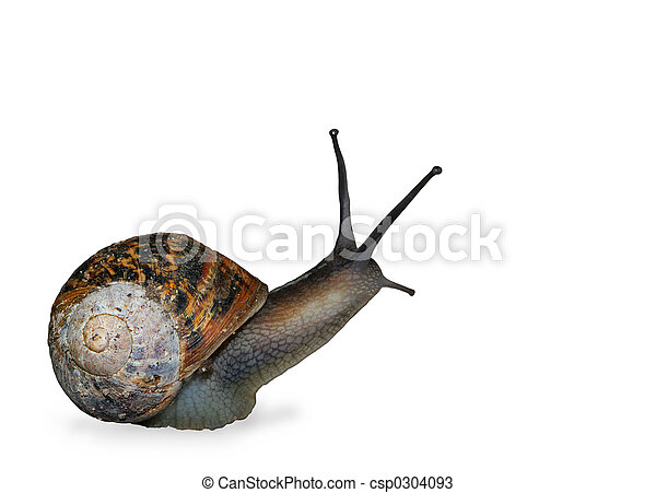 The Snail - csp0304093