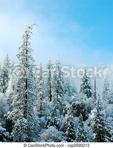 The Snow Covered Trees in Yosemite National Forest  - csp0590213