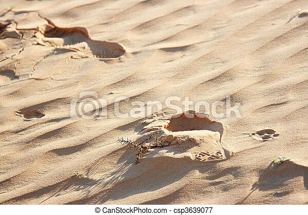 The spring in the desert - csp3639077