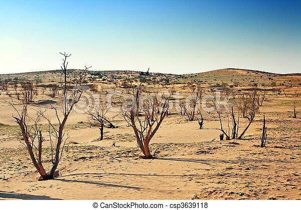The spring in the desert - csp3639118