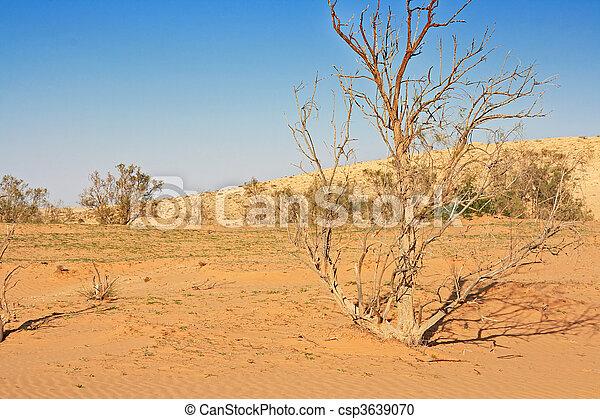 The spring in the desert - csp3639070