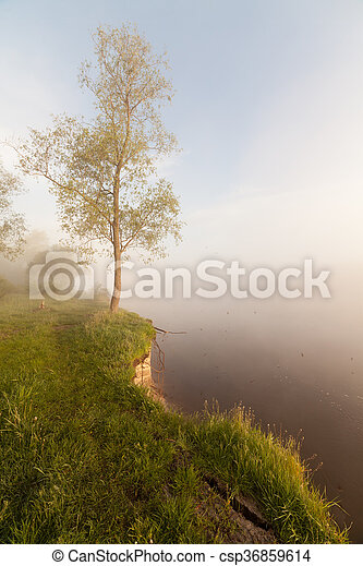 The Springtime Shoreline of a Foggy Mountain Lake at Sunrise - csp36859614