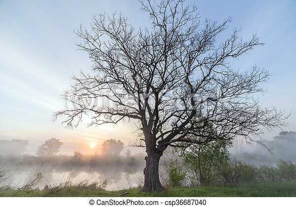 The Springtime Shoreline of a Foggy Mountain Lake at Sunrise - csp36687040