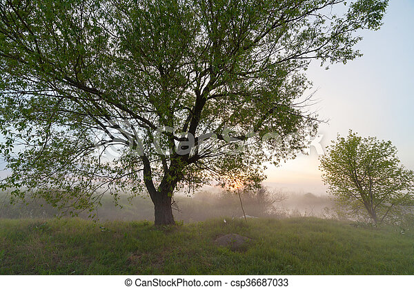 The Springtime Shoreline of a Foggy Mountain Lake at Sunrise - csp36687033