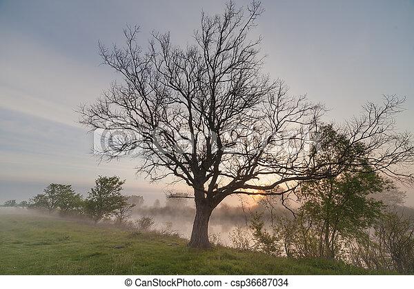The Springtime Shoreline of a Foggy Mountain Lake at Sunrise - csp36687034