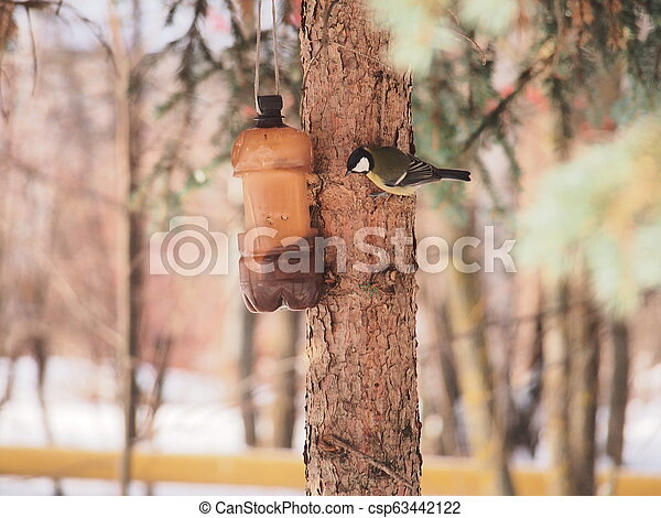 The tit feeds in the trough. Winter. The feeder is made of a plastic bottle. - csp63442122