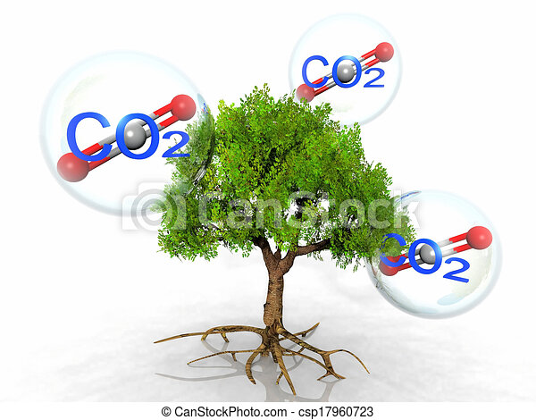 carbon dioxide and trees Carbon dioxide is normally found as a gas that is breathed out by animals and absorbed by green plants the plants, in turn, return oxygen to the atmosphere  ( see carbon cycle and respiration .