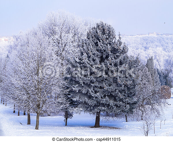 the trees on the Avenue in the Park at winter - csp44911015