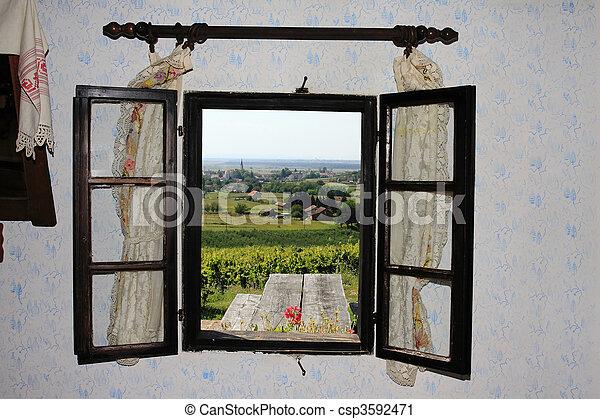 The vineyard - csp3592471