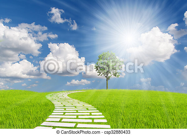 The walk on the grass to the tree under beautiful sunset sky - csp32880433