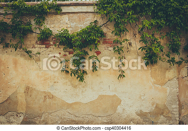 The wall covered by green leaves - csp40304416
