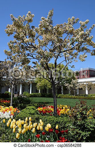 The White House in Washington, DC - csp36584288