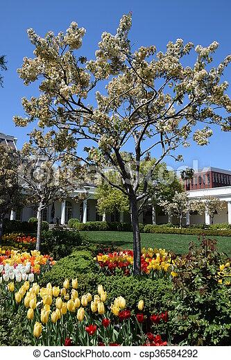 The White House in Washington, DC - csp36584292