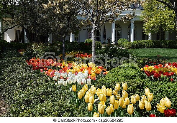 The White House in Washington, DC - csp36584295