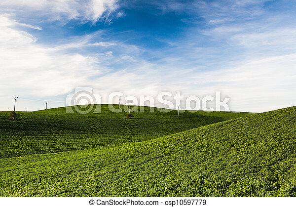 The wine region in Moravia - csp10597779
