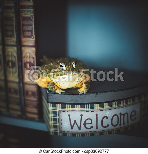 The wise African bullfrog in library on box - csp83692777
