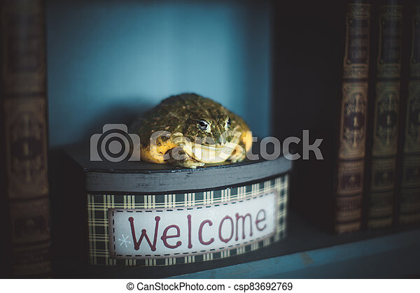 The wise African bullfrog in library on box - csp83692769